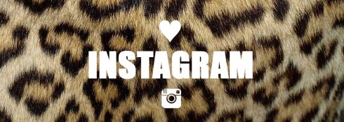 Instagram leopard