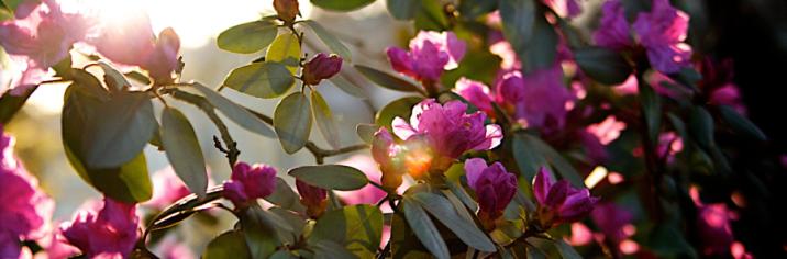 Header fleurs Les Rockalouves