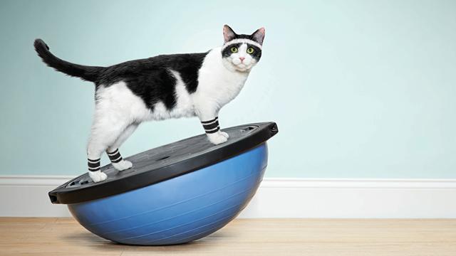 ht_cat_workout_ll_130429_wmain