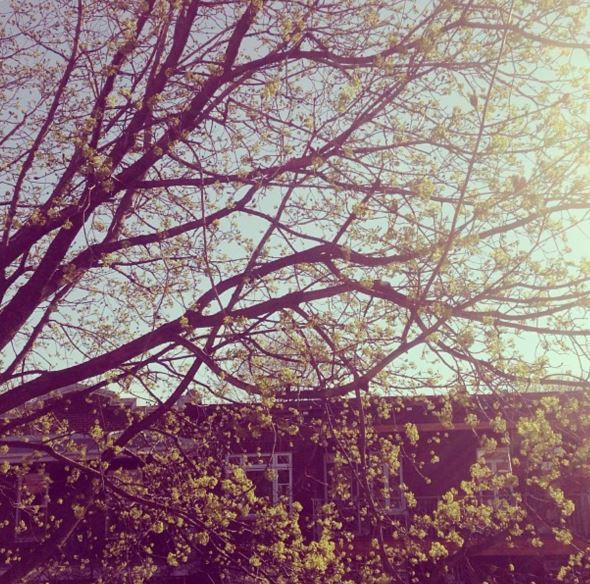 printemps2